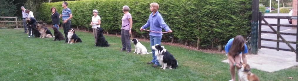 First Dog Training Club