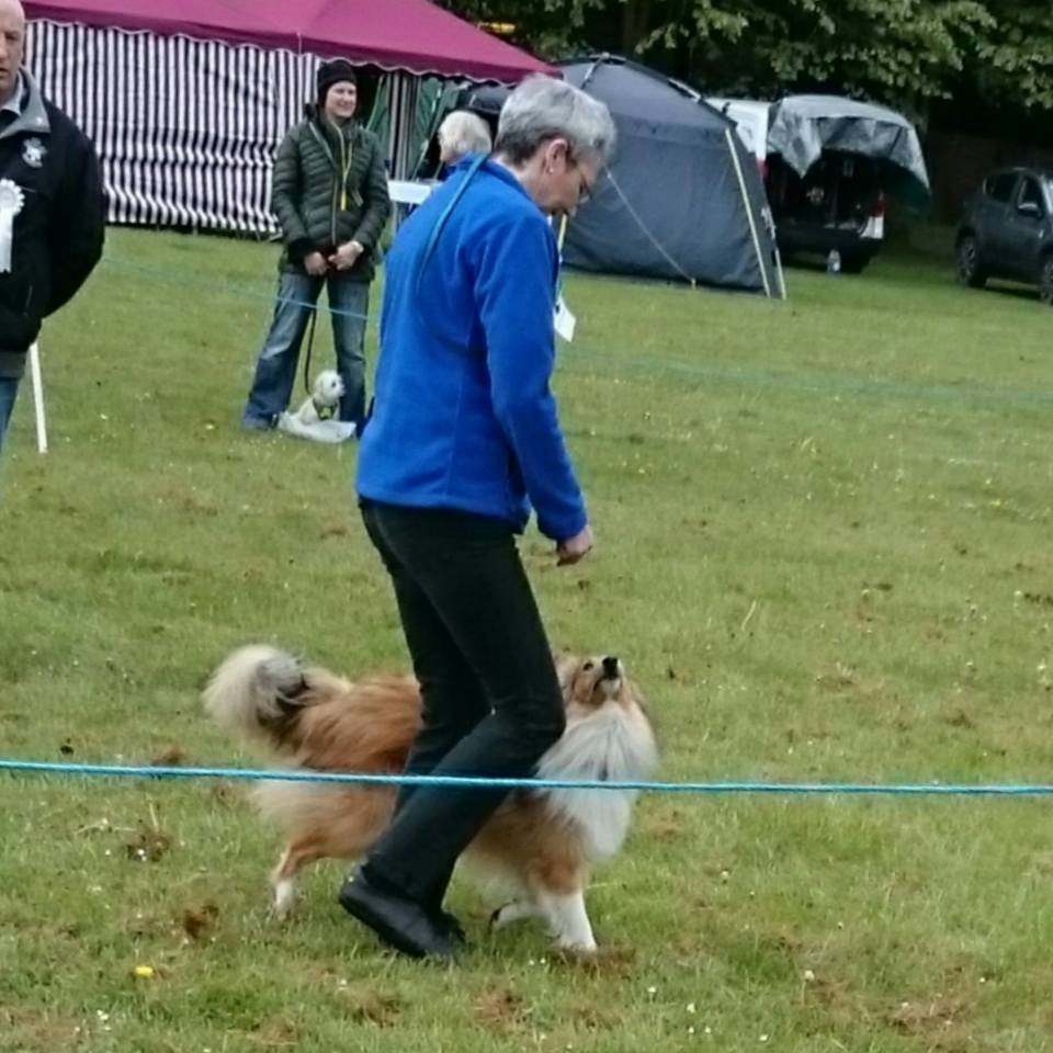 Winchester Dog Show Results