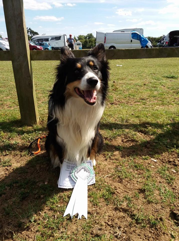 Winchester Dog Show